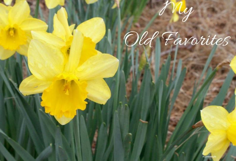 #daffodils #mjonesstyle