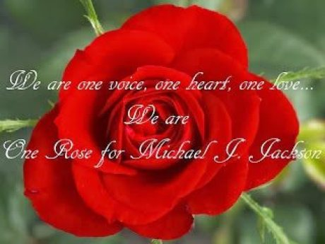 1 rose we are one voice one heart one love one rose