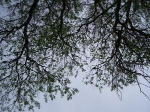 img0027Trees
