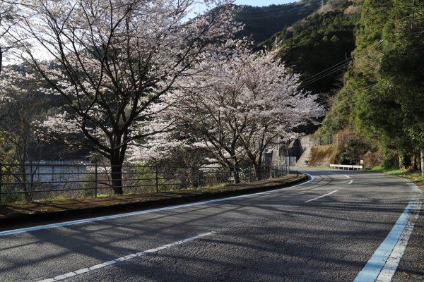 【高知】早明浦ダムライトアップ・湖畔夜桜