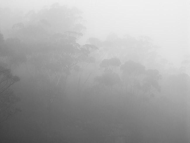 A misty Southern Highlands