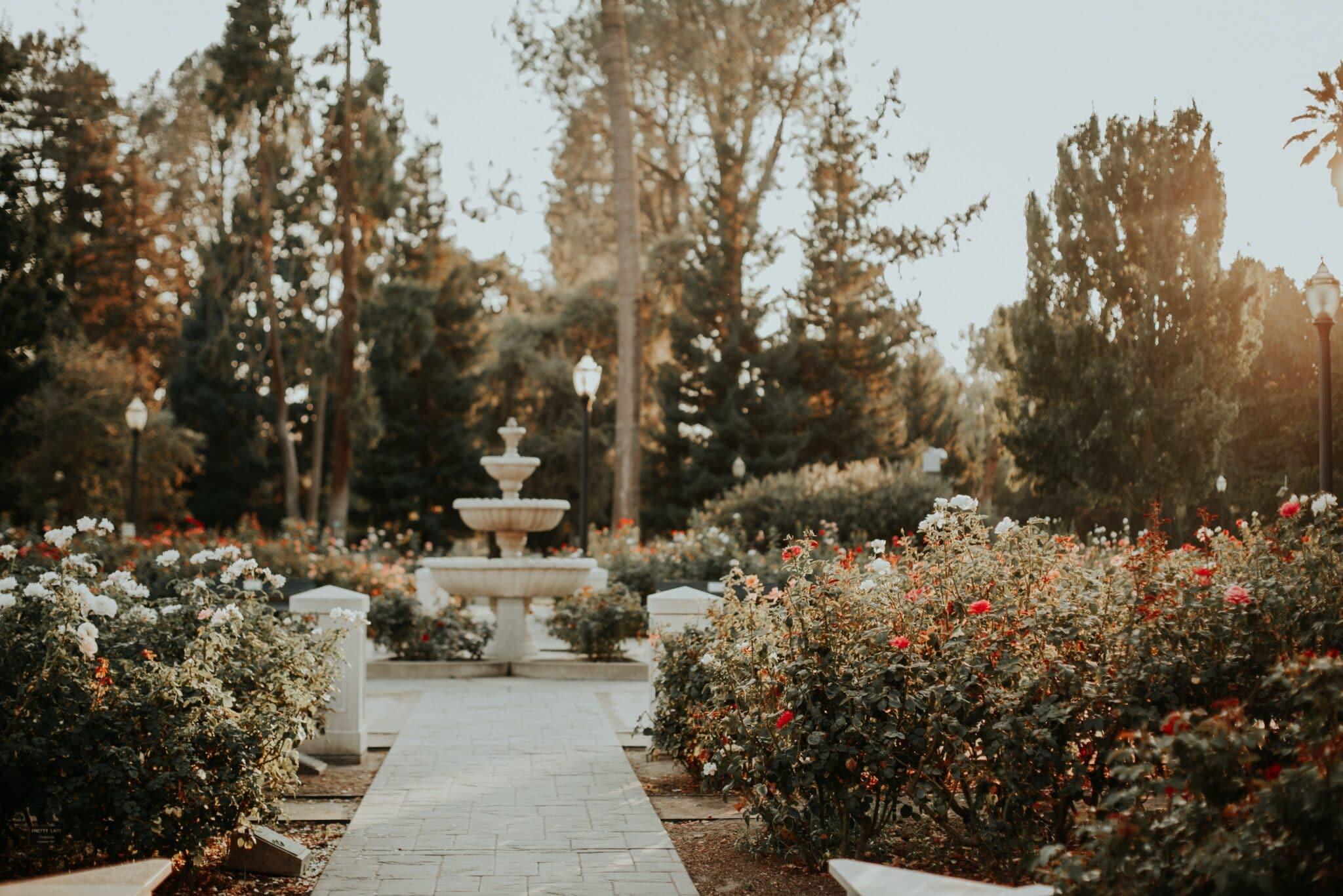 World peace rose garden scramento