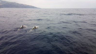 Oh ! Des dauphins !