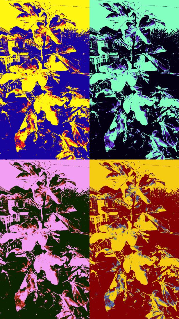 Samsung Galaxy S5 pop art picture effects, examples