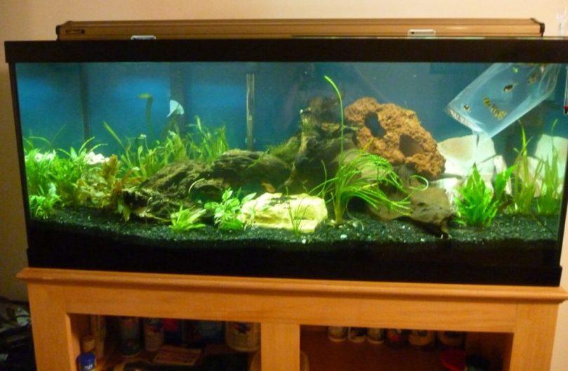 Rebuild 75 gallon aquarium