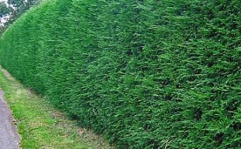 20097034519_5de26b76ba_hedge