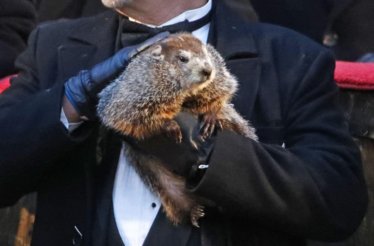 Groundhog Day Did Punxsutawney Phil See His Shadow