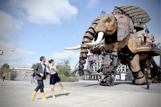 regard-elephant