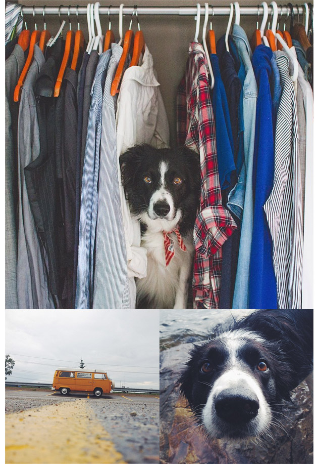 Animales en Instagram - andrewknapp