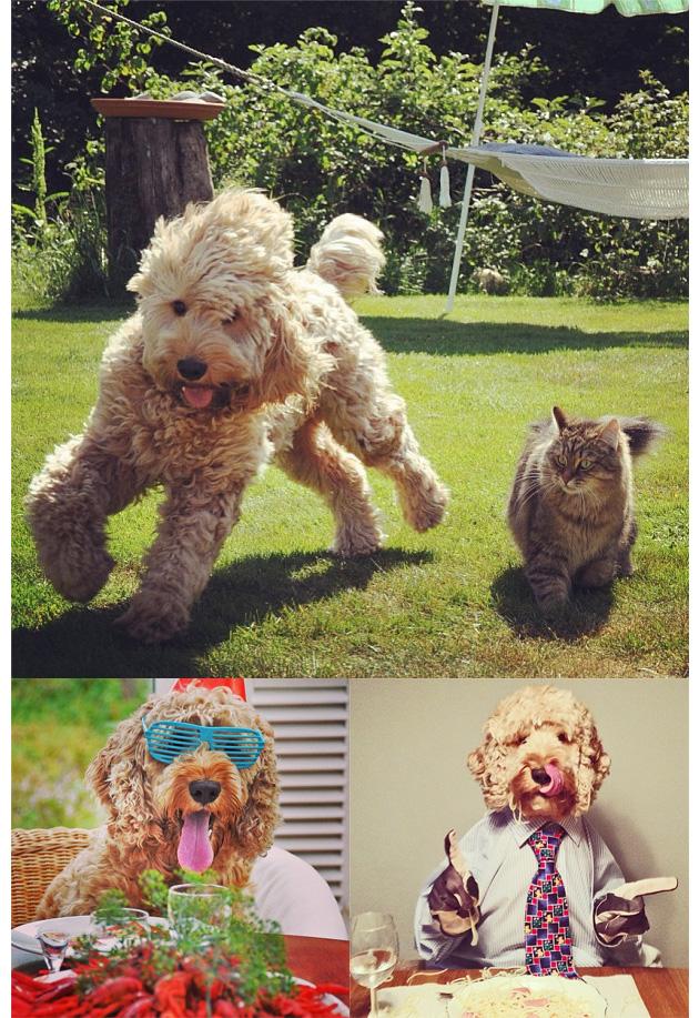 Animales en Instagram - bingelibong