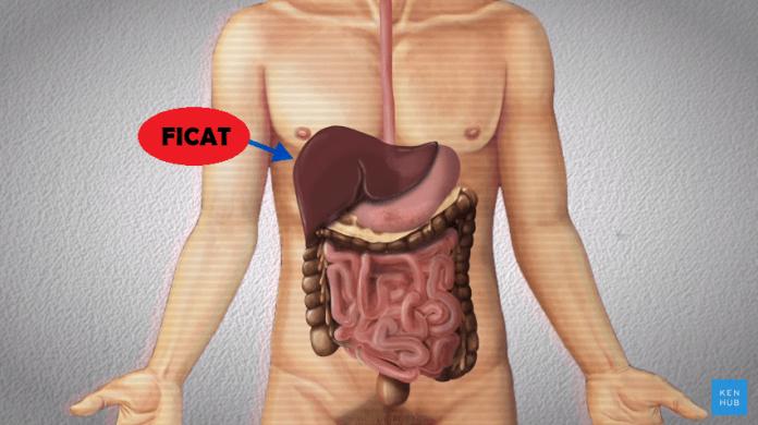 De ce nu poate încasa corpul uman o lovitură la ficat? (VIDEO)