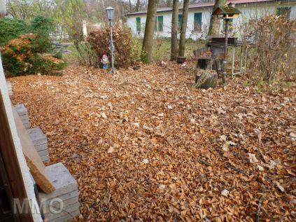 Donnerstag vorm Herbstputz