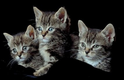 kittens on Women in Ministry by Cheryl Schatz