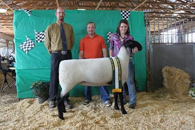 MN Agriculture: Jeremy Geske And His Passion For Sheep