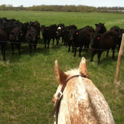 MN Agriculture – Cattle Woman Rachel Gray