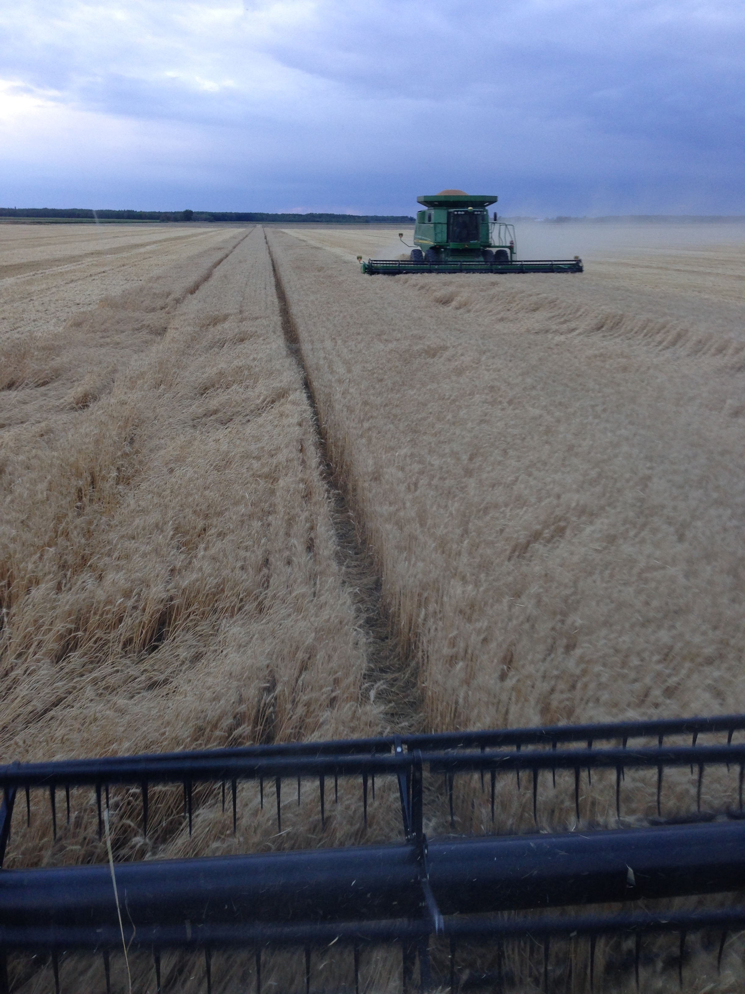 Mn Agriculture South 89 Seeds And Svc Where Grass Seed