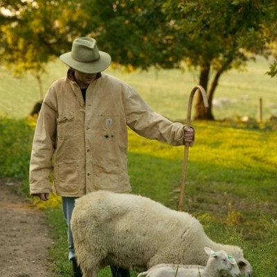 MN Agriculture: Shepherd's Way, Sheep and Cheese