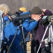 Winter Eagle Viewing Field Trips