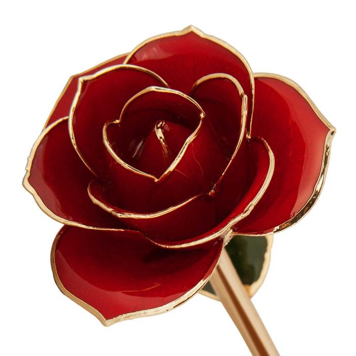Gold Dipped Rose, Ravishing Red