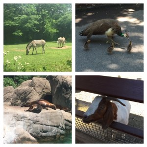 Some of the zoo's residents!