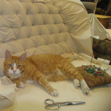 Møbelværkstedets kat