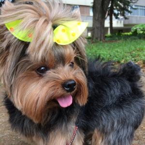 Best Dry Dog Food For Yorkies Moberry Pets