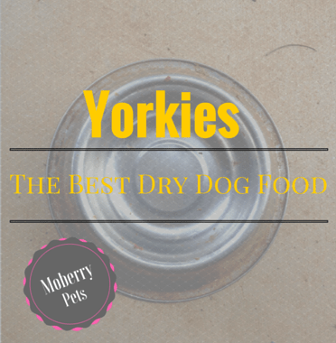 Best Dry Dog Food For Yorkies