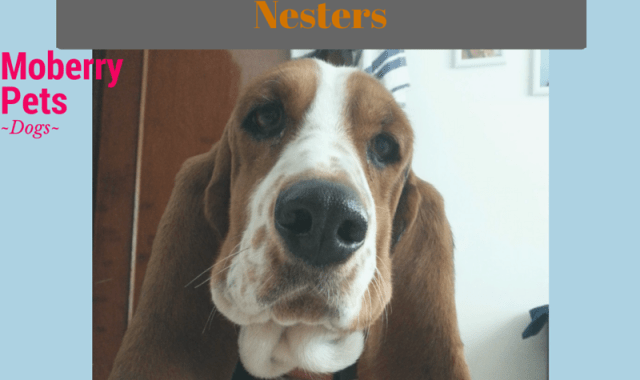 The Best Dogs for Empty Nesters