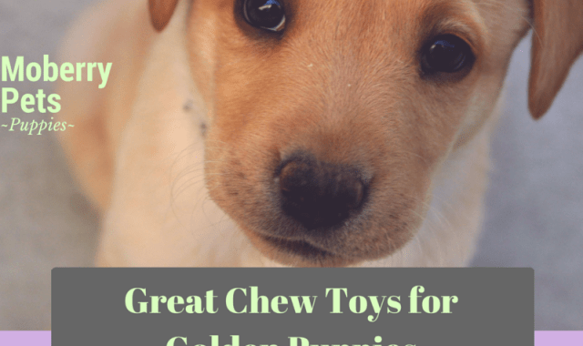The Best Chew Toys for Golden Retrievers
