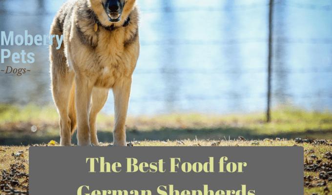 The Best Dog Food for German Shepherd