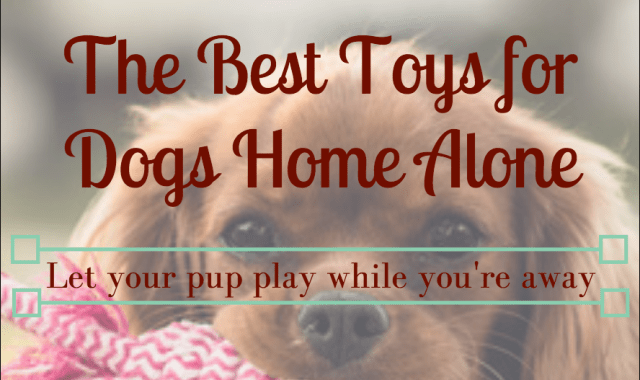 Best Toys for Puppies Home Alone