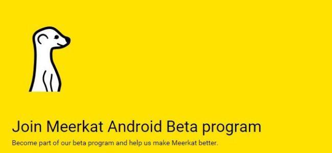 Meerkat_Beta
