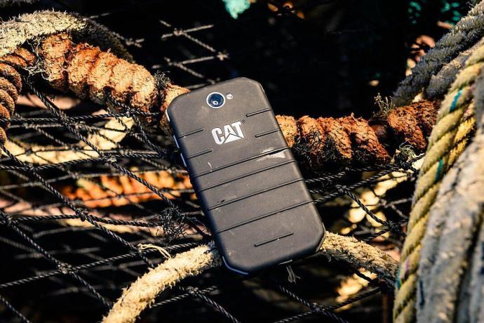 Cat S31 1 1085
