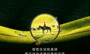 Huawei P30 Pro Zoom Teaser2