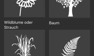 Flora Incognita App 2