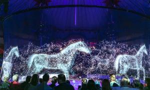 Circus Roncalli Pferde