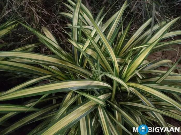 LeEco-Le-Max-Camera-Samples-Night-Shots-plant-pattern-non-hdr