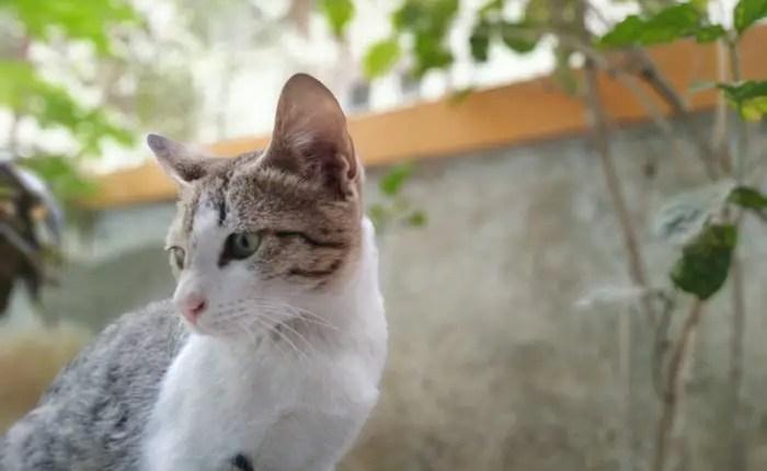 Vivo-V5-Plus-Review-Selfie-Camera-Samples-19