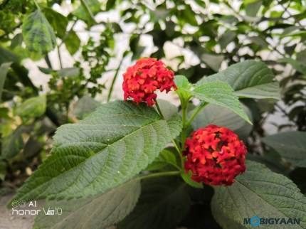 Honor-View10-Review-Camera-Samples-14