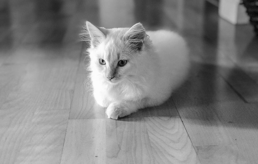 Kitten resting on vinyl floor