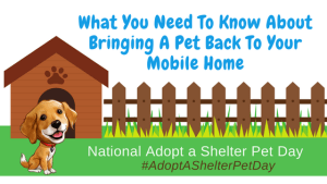 What You Need To Know About Bringing A Pet Back To Your Mobile Home