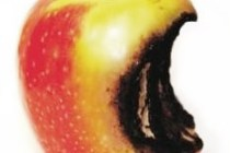 apple-rotten