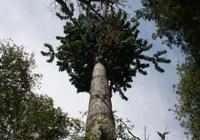 120321-tree