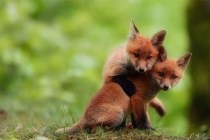 these-adorable-baby-animals-will-melt-your-heart-25-photos_520_14