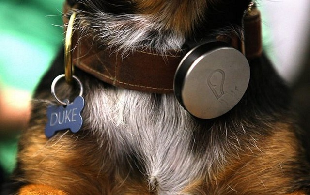 whistle-wearable-dog