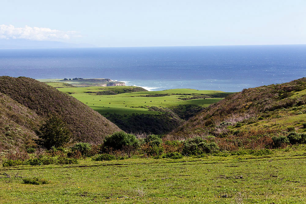 "Coast Dairies property in Santa Cruz County. Cows still graze on the wide flat first marine terrace. Photo:href=""https://commons.wikimedia.org/wiki/File:Coast_Dairies_near_Santa_Cruz.JPG"">BLM"