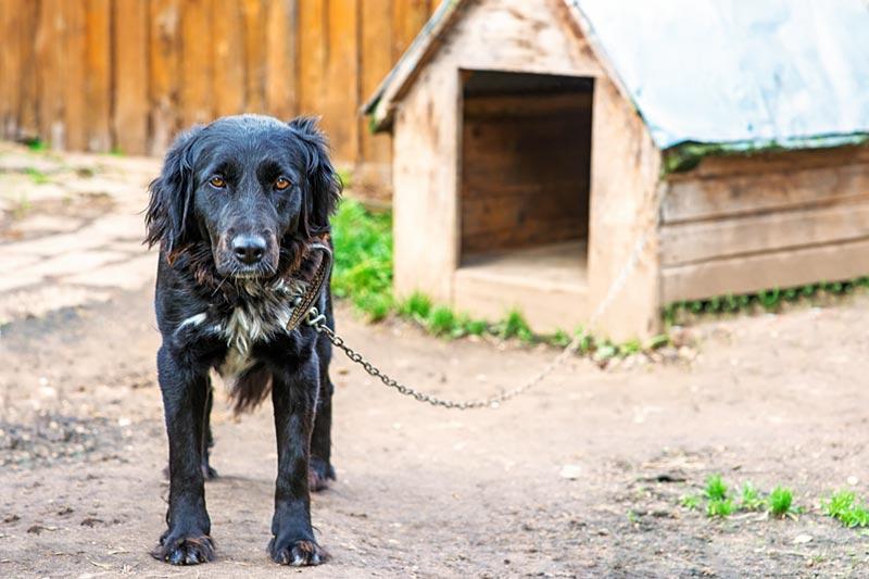 Hund aus Tierschutz an der Kette