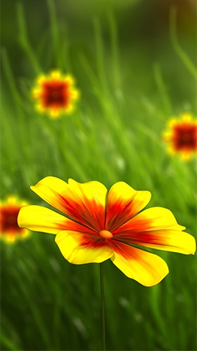 Download Free Android Wallpaper Flower 360 3d 4357 Mobilesmspk Net