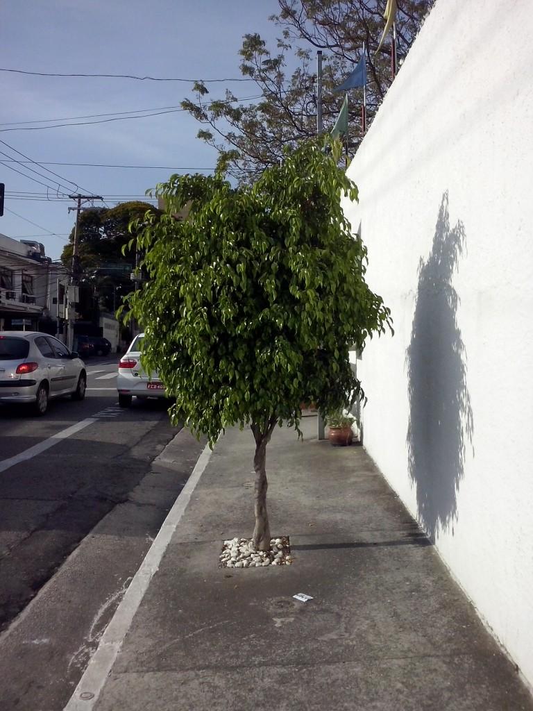 por Irene Quintáns na Vila Clementino