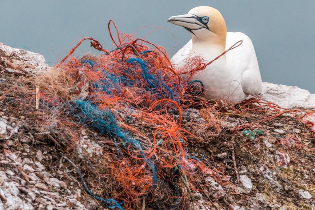 Ein Vogel sitzt auf einem Plastiknetz